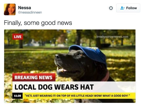 """Dog - Nessa Follow @nessadinneen Finally, some good news LIVE breakyourownnews.com BREAKING NEWS LOCAL DOG WEARS HAT 11:20 """"HE'S JUST WEARING IT! ON TOP OF HIS LITTLE HEAD! wow! WHAT A GOOD BOY!"""