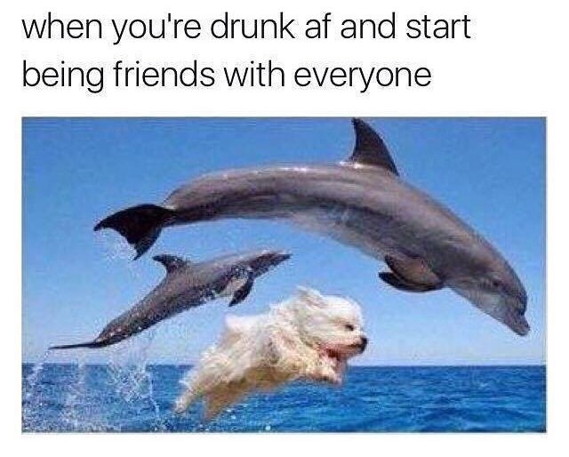 Bottlenose dolphin - when you're drunk af and start being friends with everyone
