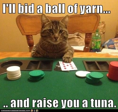 I'll bid a ball of yarn... .. and raise you a tuna.