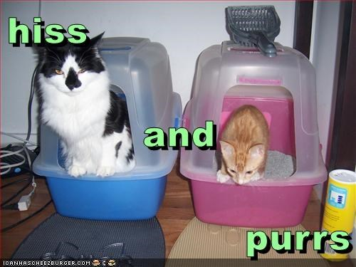 purrs hiss (hers) (his) caption Cats - 9020021760