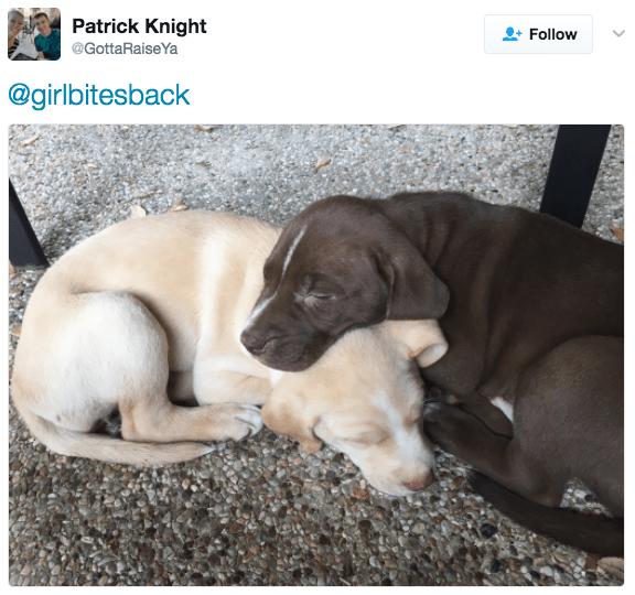 Dog - Patrick Knight Follow @GottaRaiseYa @girlbitesback