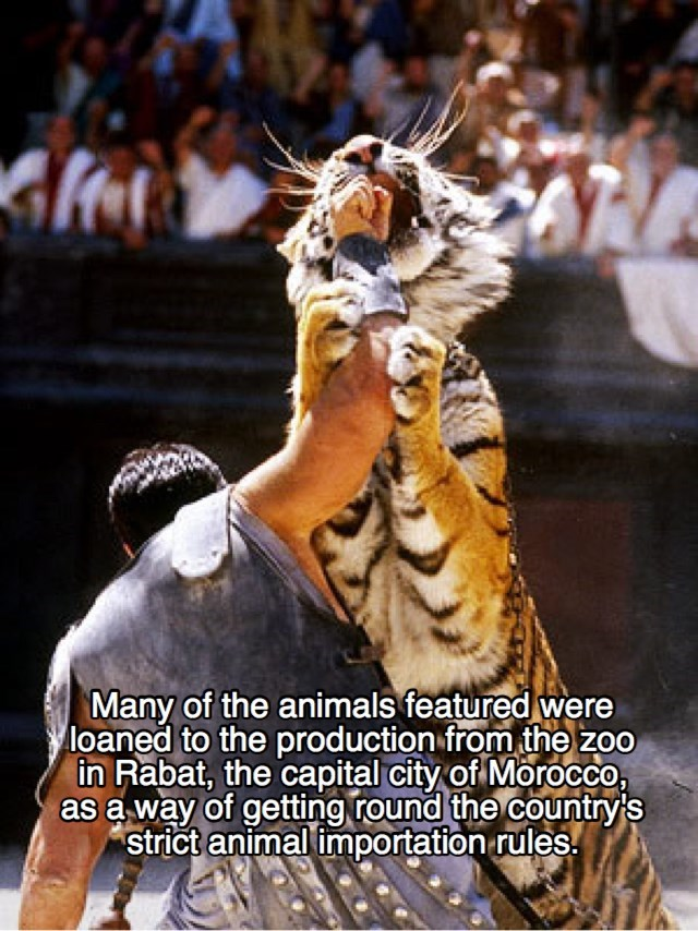 Bengal tiger - Many of the animals featured were loaned to the production from the zoo in Rabat, the capital city of Morocco, as a way of getting round the country's strict animal importation rules