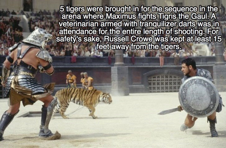 Bengal tiger - 5 tigers were brought in for the sequence in the arena where Maximus fights Tigris the Gaul. A veterinarian armed with tranquilizer darts was in attendance for the entire length of shooting. For safety's sake, Russell Crowe was kept at least 15 feet away from the tigers.