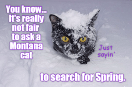 search cat Montana spring ask fair not caption - 9020247040