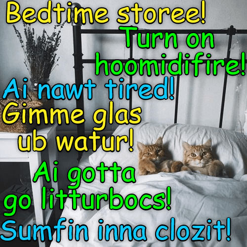 litterbox water bedtime closet glass story caption Cats