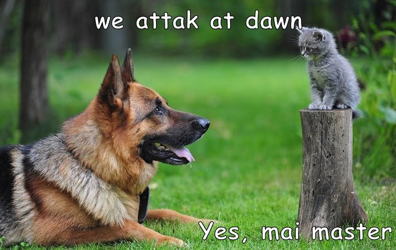 cat,dogs,master,attack,dawn,caption