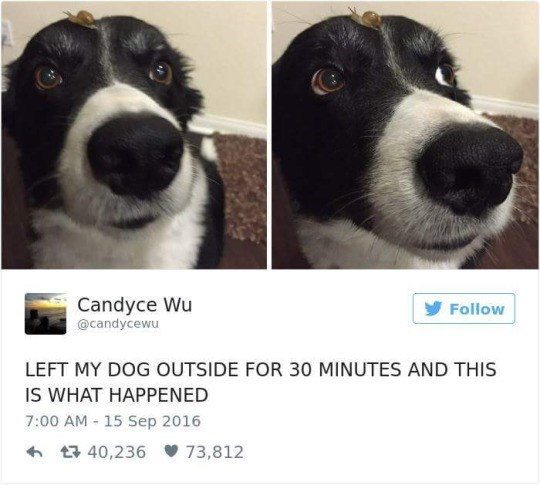 Dog - Candyce Wu Follow @candycewu LEFT MY DOG OUTSIDE FOR 30 MINUTES AND THIS IS WHAT HAPPENED 7:00 AM - 15 Sep 2016 t 40,236 73,812