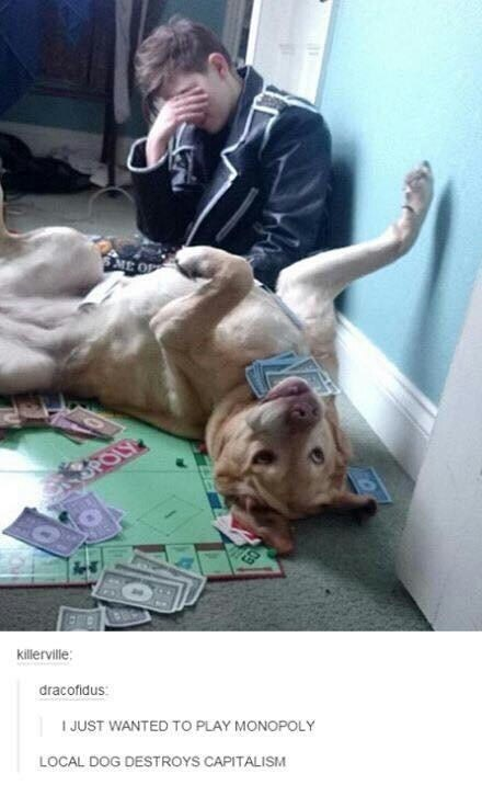 Dog - S ME OP BPOLY killerville dracofidus JUST WANTED TO PLAY MONOPOLY LOCAL DOG DESTROYS CAPITALISM