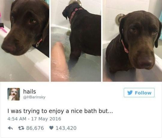 Dog - hails Follow @HBarinsky I was trying to enjoy a nice bath but... 4:54 AM - 17 May 2016 t86,676 143,420