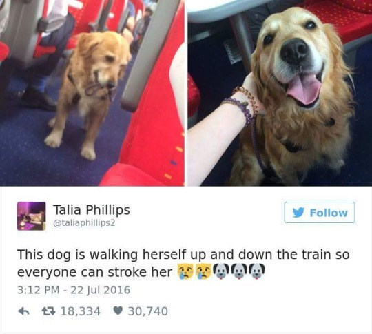 Dog - Talia Phillips taliaphillips2 Follow This dog is walking herself up and down the train so everyone can stroke her 3:12 PM - 22 Jul 2016 t18,334 30,740