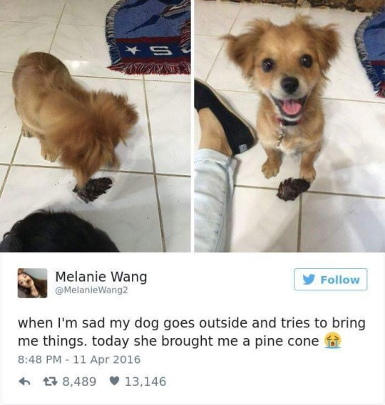 Dog - S Melanie Wang Follow @MelanieWang2 when I'm sad my dog goes outside and tries to bring me things. today she brought me a pine cone 8:48 PM - 11 Apr 2016 8,489 13,146