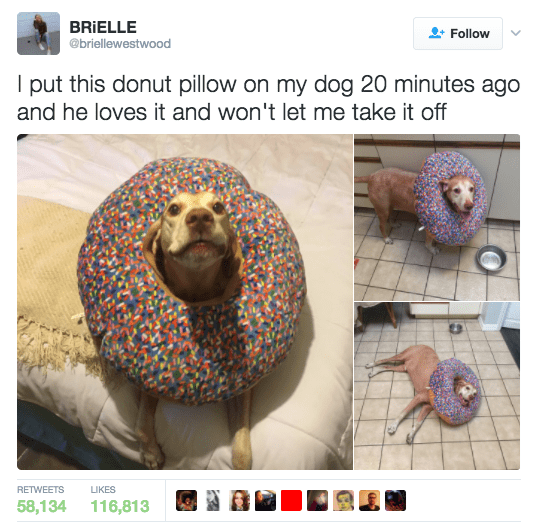 Organism - BRIELLE Follow @briellewestwood I put this donut pillow on my dog 20 minutes ago and he loves it and won't let me take it off RETWEETS LIKES 58,134 116,813