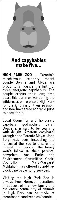 Text - And capybabies make five... Toronto's HIGH PARK ZO0 mischievous celebrity rodent couple Bonnie and Clyde are proud to announce the birth of three energetic capybabies. The couple credits their long time apart this summer wandering the wilderness of Toronto's High Park for the kindling of their passion, and now have three adorable pups to show for it Local Councillor and honourary godmother, Sarah Doucette, is said to be beaming with delight. Amateur capybara wrangler and Toronto Mayor, Jo