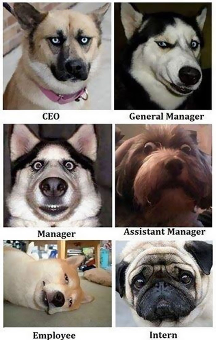 work meme of company roles represented by dogs