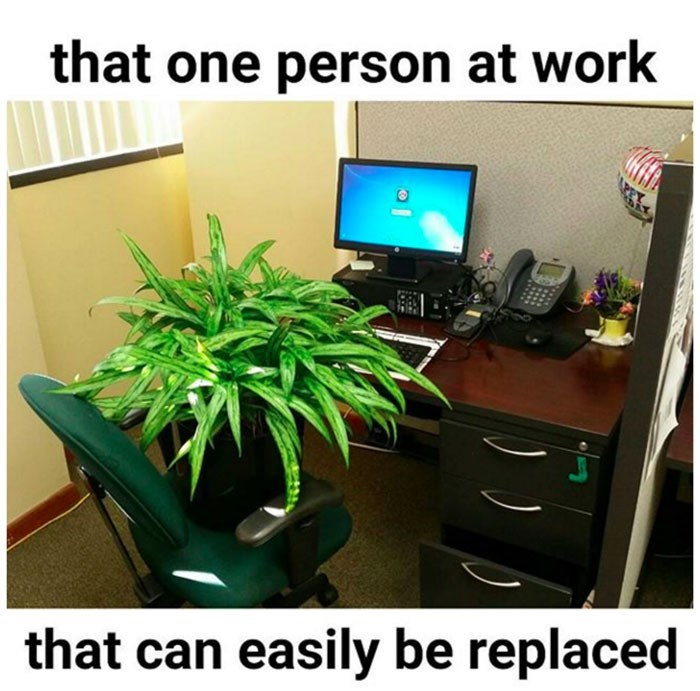 work meme about an employee that is as useful as a plant