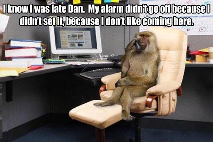 work meme about being late to work with a monkey talking on the phone in an office