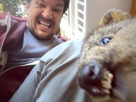 quokka - wombat
