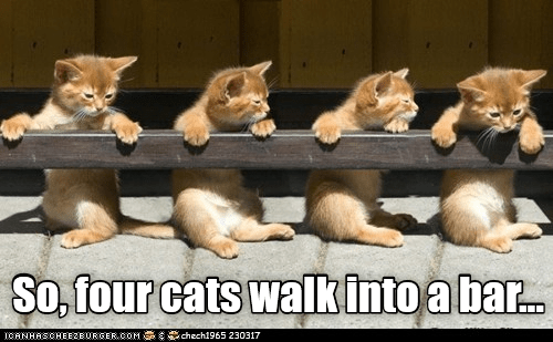 bar into walk caption Cats