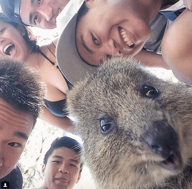 quokka - Selfie