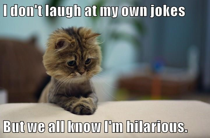 hilarious cat jokes laugh dont caption