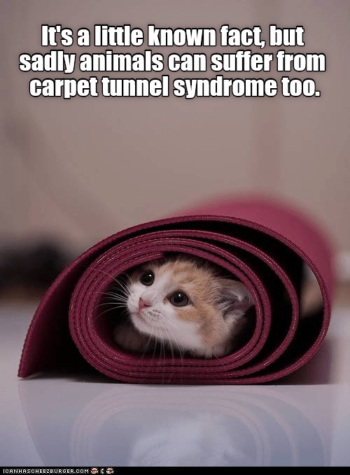 cat syndrome caption tunnel carpet