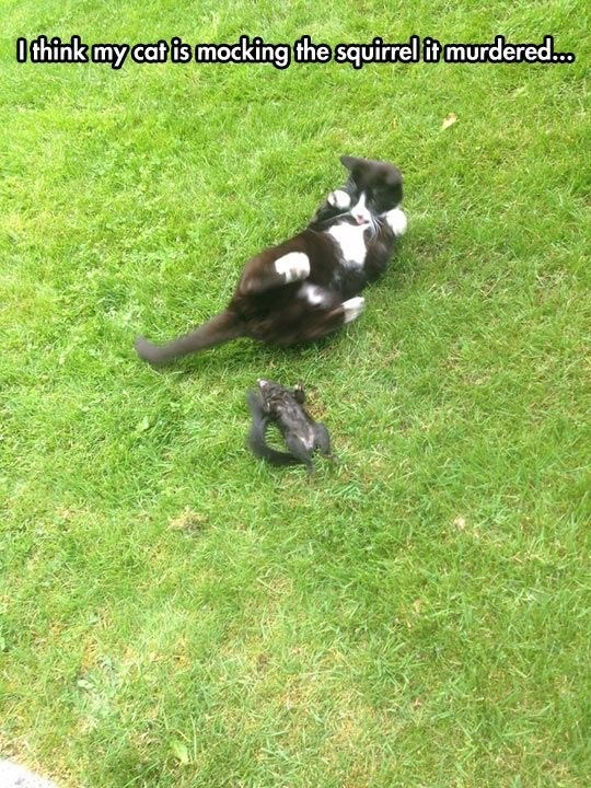 Canidae - Othink my catis mocking the squirrelit murdered.o