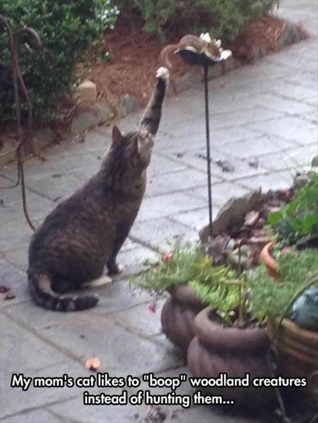 Cat - Mymoms cat likes to boop woodland creatures instead of hunting them...