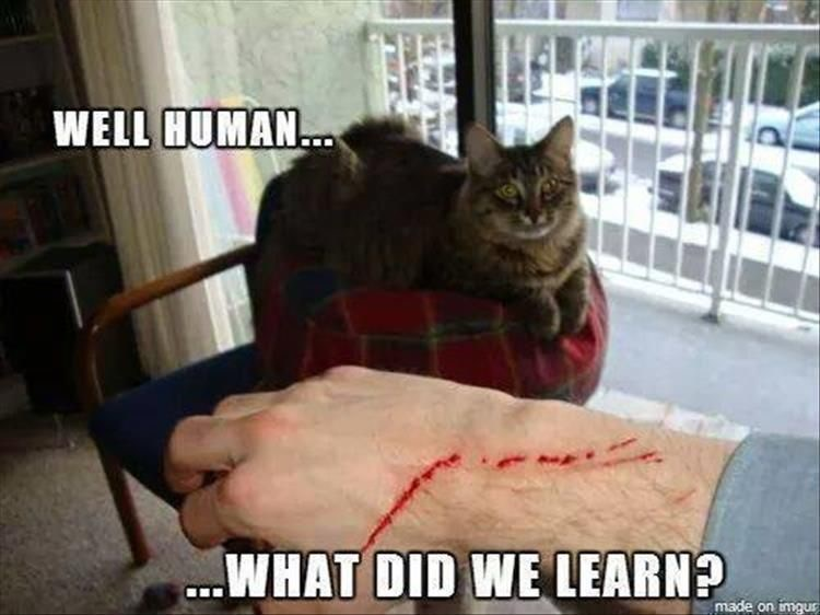Cat - WELL HUMAN. ..WHAT DID WE LEARN? made on imqu