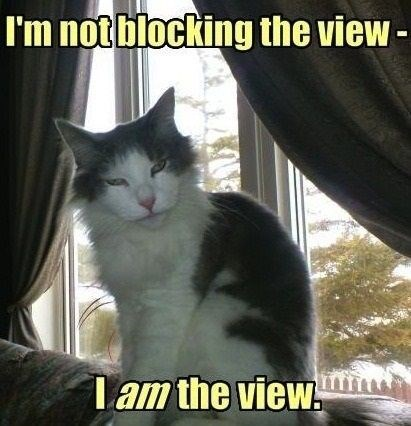 Cat - I'm notblocking the view Tam the view