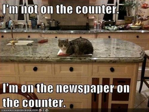 Cat - I'm not on the counter I'm on the nevwspaper on the counter. ICANHASCHEEZEURGER COM