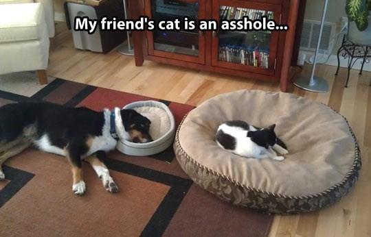 Mammal - My friend's cat is an asshole...