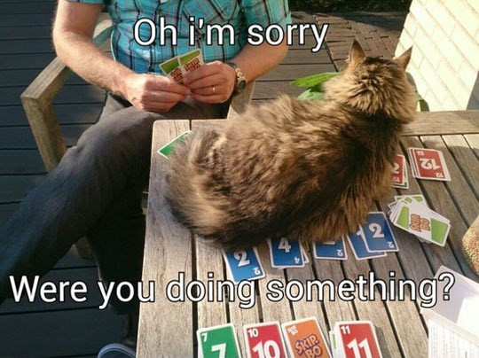 Cat - Oh im sorry 12 E Were you doingisomething? 2 10 10 SKIP BO
