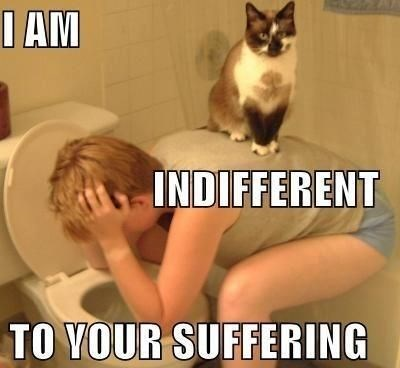 Cat - I AM INDIFFERENT TO YOUR SUFFERING