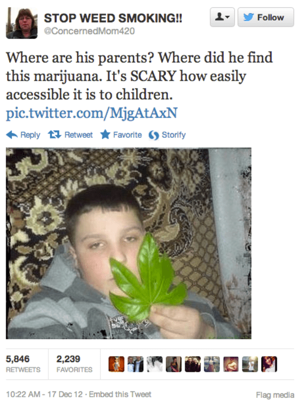 cringeworthy tweet about marijuana of a kid holding up a normal tree leaf