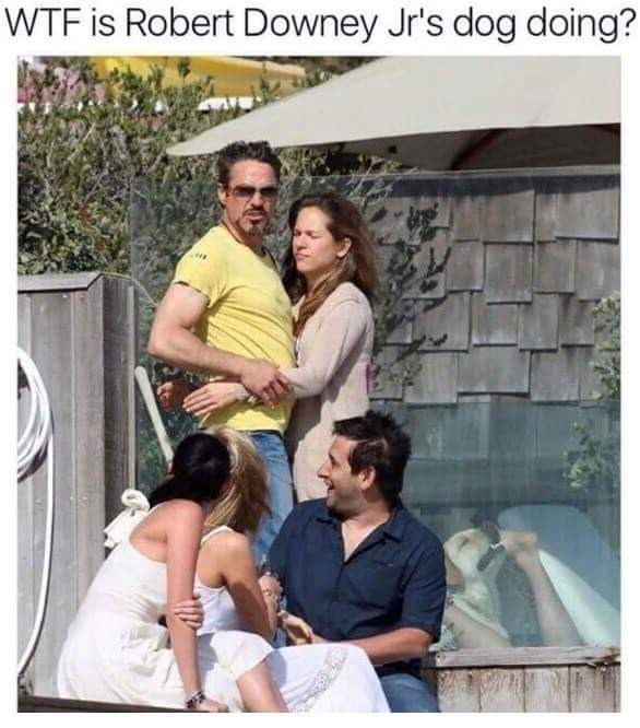 People - WTF is Robert Downey Jr's dog doing?