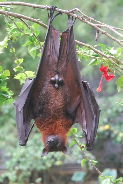upside down bat with his business for the whole world to see