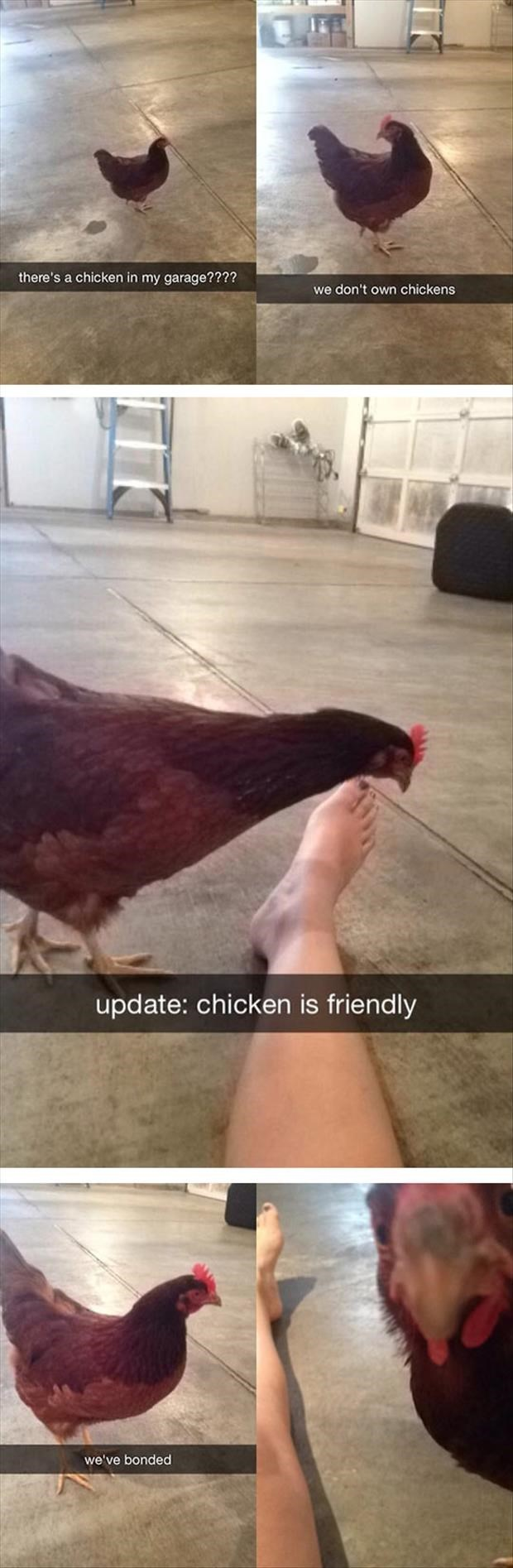 Hair - there's a chicken in my garage???? we don't own chickens update: chicken is friendly we've bonded