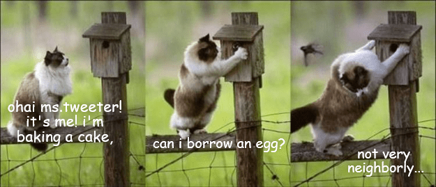 cat tweeter borrow egg caption - 9021618432