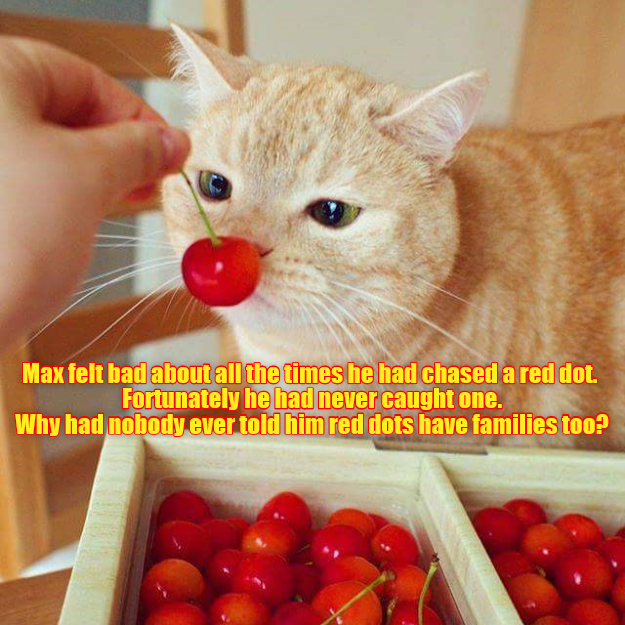 bad cat felt families red dot caption chased - 9021657344