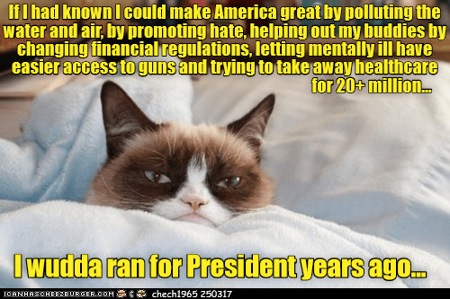 guns cat polluting great america make healthcare caption - 9021675008
