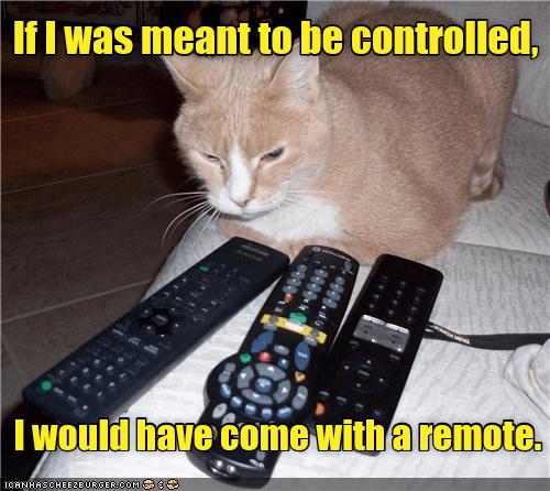 cat remote come caption meant - 9021716736