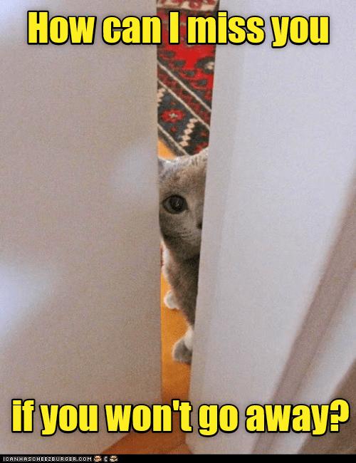 go away you cat miss how wont caption