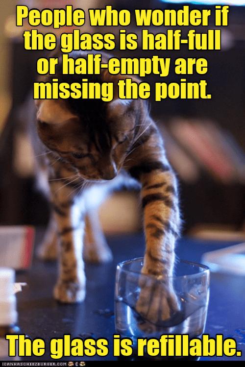 half cat glass full empty caption - 9021720064