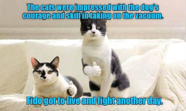 dogs courage fight caption Cats vacuum - 9021755392