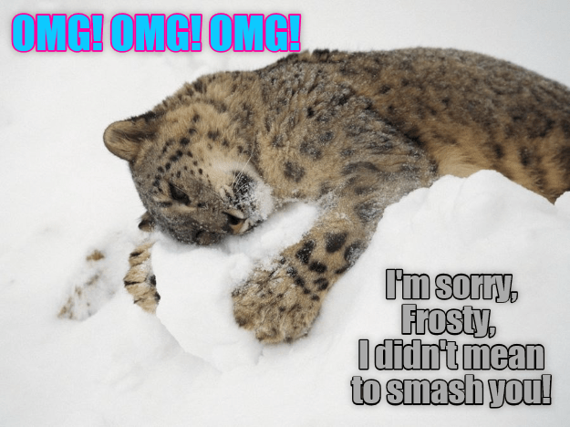 cat smash mean didnt caption frosty omg - 9021934336