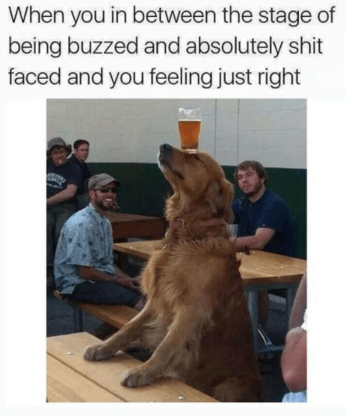 Canidae - When you in between the stage of being buzzed and absolutely shit faced and you feeling just right