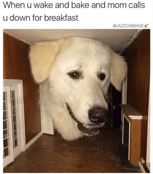 Dog - When u wake and bake and mom calls u down for breakfast JAZZCABBAGE