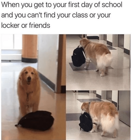 Dog - When you get to your first day of school and you can't find your class or your locker or friends
