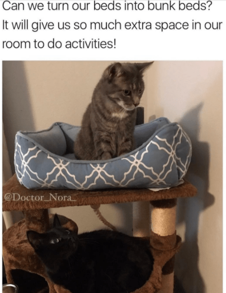 Cat - Can we turn our beds into bunk beds? It will give us so much extra space in our room to do activities! @Doctor Nora
