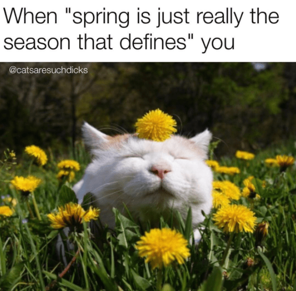 """Cat - When """"spring is just really the season that defines"""" you @catsaresuchdicks"""